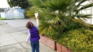 Palm T Tree