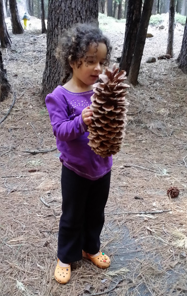 Family Traditions: See The Forest For The Trees